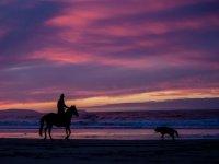 paseo a caballo en un atardecer junto a un perro