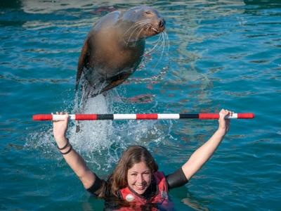 Baño con león marino en Caleta de Fuste