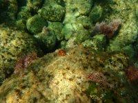 Descubre los fondos marinos