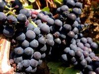 Descubre la esencia de La Rioja con su mejor producto