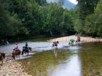 Horses passing the river