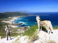 fox and man watching the coast.JPG