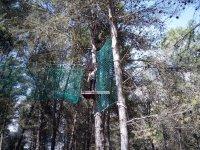 arborismo访问我们的公园