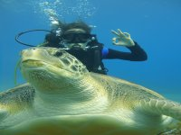 Bautizo con tortugas