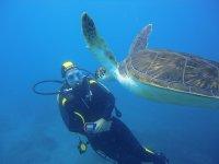 Con la tortuga