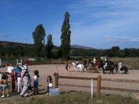 小马和马匹