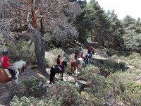 通过在马背上Segoviano组森林