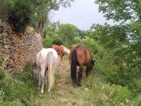 安静和方便骑马小马儿童