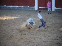 cutting the heifer