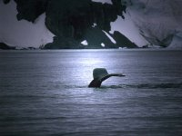 avvistamento di cetacei