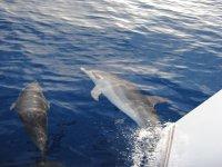 uscite per vedere le balene