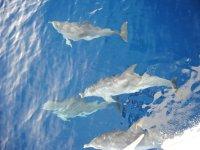 vedere i delfini