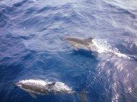 Possiamo vedere i cetacei mentre navigiamo in barca a Barcellona