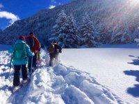 Mulas在雪鞋探险队进入森林