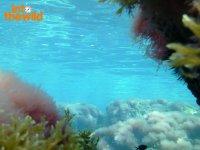 Sotto il mare di Ibiza
