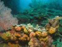 Paisajes subacuáticos