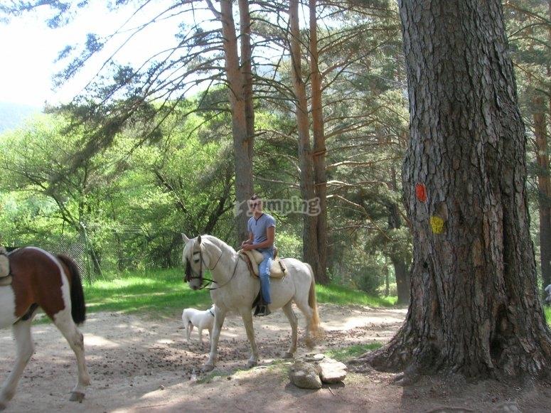 Caballos entre pinares