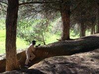 batallas en la naturaleza