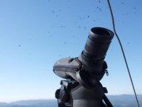equipo optico con aves volando el cielo