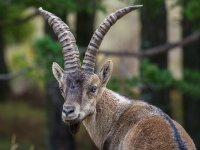 Maravillosa fauna autoctona