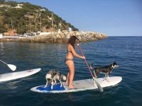 Paddle surfing with dogs