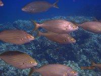 放松在船上鱼赫罗纳的海底