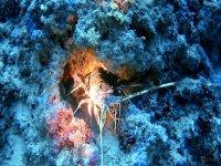 探索海底生活