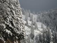 Carretera y abetos nevados.JPG