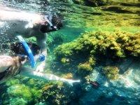 布拉瓦海岸上的浮潜