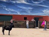 personas en el interior de una plaza de toros con una vaquilla.jpg