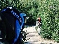 Refugiandose en los arbustos
