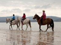 Recorre la playa de Laredo a lomos de un caballo