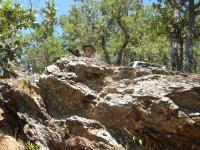 escondida tras las rocas