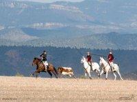 Horses behind the heifer