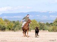 Corriendo a caballo tras la vaquilla