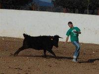 Heifer running behind boy