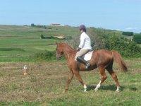 Paseo en caballo canela