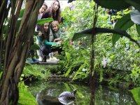Contemplando las tortugas