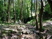 bosque de zugarramurdi