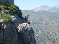 铁索攀岩向导攀登拉链线科马雷斯