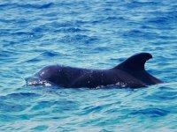 海豚旁边的一艘船acuatic服务标志
