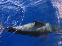 delfin sumergido en el agua