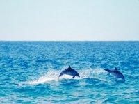 两只海豚在水中跳跃