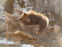 鹿狼熊休息