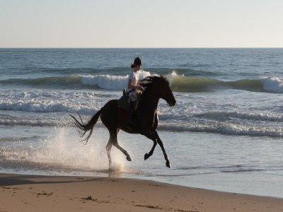 Equinos Sol y Playa Rutas a Caballo