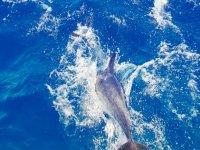 航行在公海豚豚