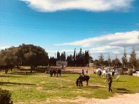 Riding class for all levels in Mallorca
