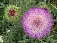Flores silvestres en Jaen