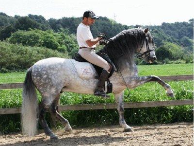 Centro de Equitación Mopresa