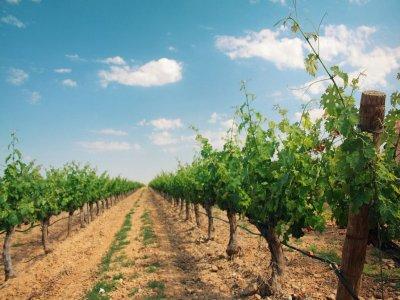 Apit La Rioja Enoturismo